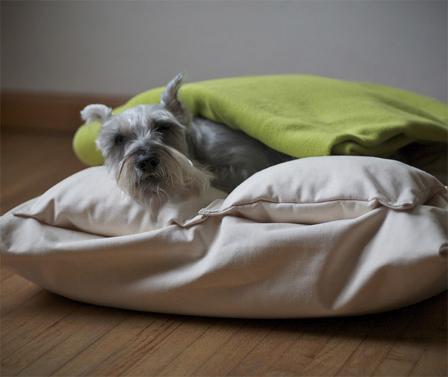 chico-dog-beds