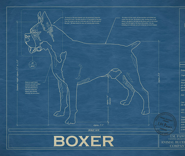 animal-blueprint
