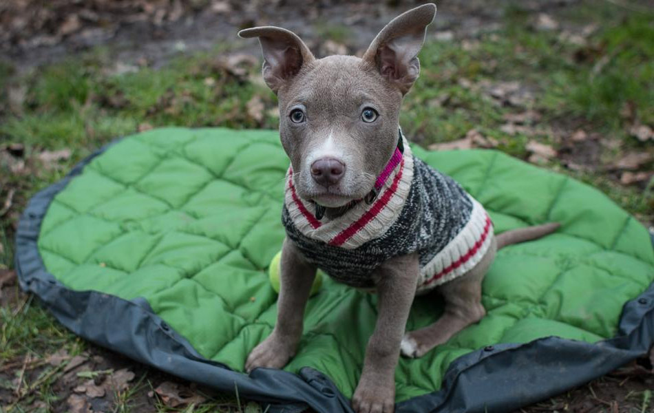 Take Your Dog Camping With The DoggyBag